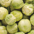 Healthy Vegetables - Brussel sprouts