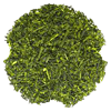 Drink Japanese Sencha Green Tea