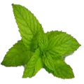 Mint Leaves - Used in ginger mint tea