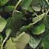 Healthy Vegetables - Watercress